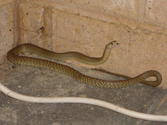 Snakesmall.jpg