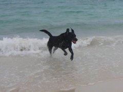 Hamish beach 2