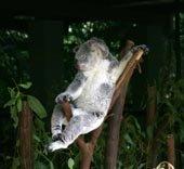 Australia zoo resize099