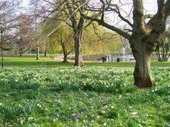 Victoria Park in Spring, Paignton, Devon