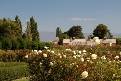 The (Australian) National Rose garden, Woolmers, Longford Tas Feb 2012