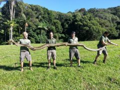 Python 5m Kuranda