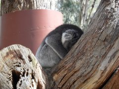 Adelaide, Cleland Wildlife Park - Soooooo cute