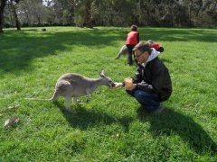 Adelaide, Cleland Wildlife Park - Feeding the Wallabies