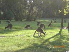 Pinaroo Park