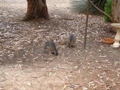 koarla walk kangaroo island