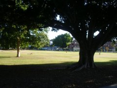 Milton State School across Gregory Park