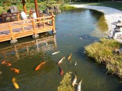 Japanese Garden Gosford