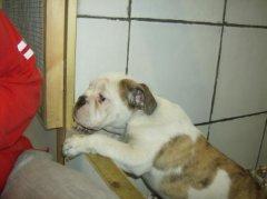 Bert as a pup.