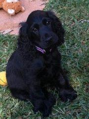 Alfie aged 3 months