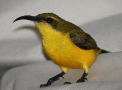 Sunbird in garage