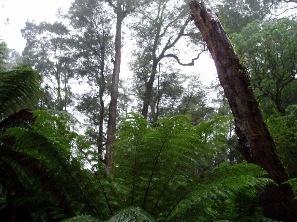 Rain Forest (9).JPG