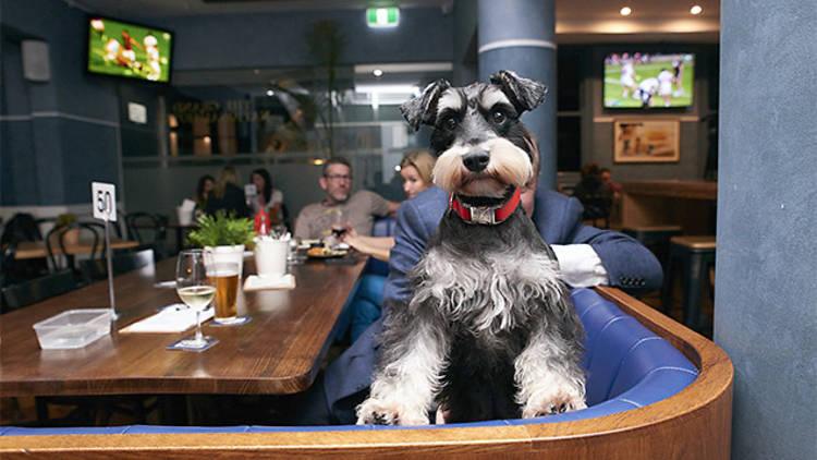 dog in pub.jpg