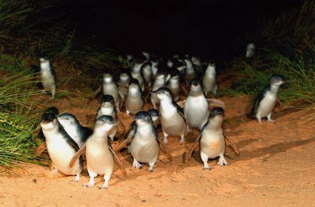 penguin7.jpg