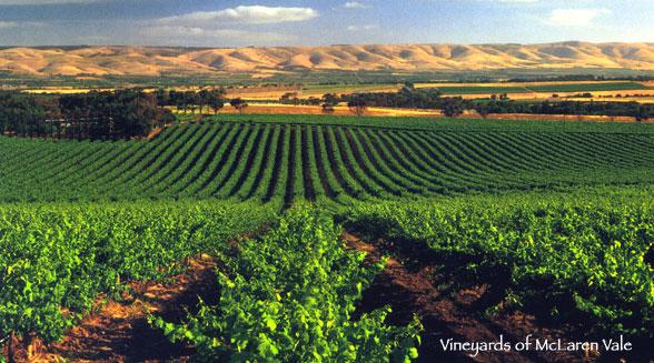 Birchwood Winery.jpg