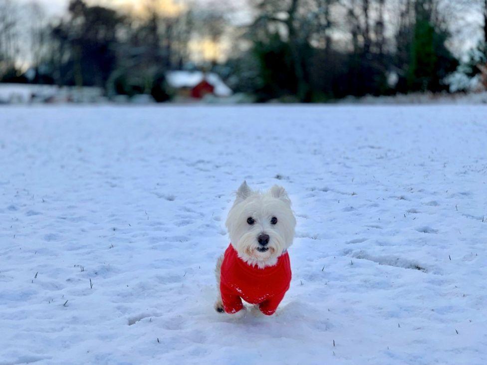 casper in the snow.jpg